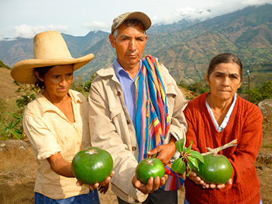 Lucuma Producers from the high mountains of Peru
