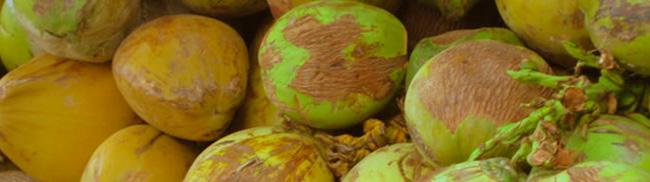 Coconuts, oils, mature, flesh, minerals, processed